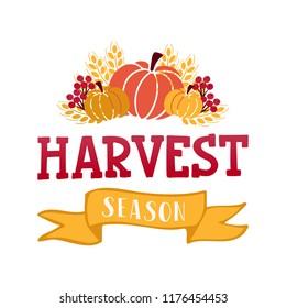 Harvest season - hand drawn lettering phrase with autumn harvest symbols. Harvest fest poster design. Template for postcard or invitation card, print. Vector illustration.
