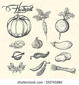 Harvest Vector illustration of vegetables in vintage style.