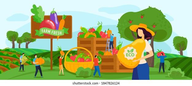 Harvesting fruits vegetables vector illustration. Cartoon flat tiny farmer people working on farmland garden, woman worker character holding pear harvest, farm agricultural seasonal work background
