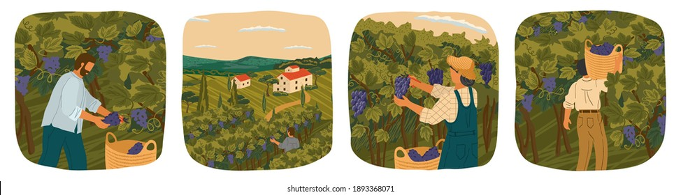The harvesting of wine grapes. People work on a winery field. Hand draw vector illustration poster. Vineyard landscape with grape tree field and winery villa on background