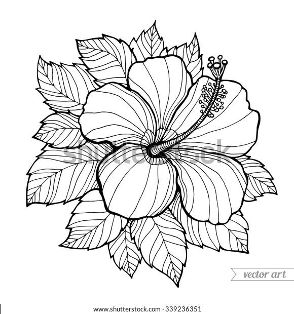 Hawaii Hibiscus Flower Leaf Aloha Hawaii Stock Vector Royalty Free 339236351