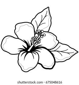 Hawaiian hibiscus flower. Vector black and white illustration