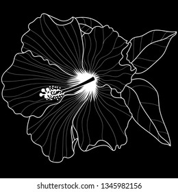 Hawaiian Hibiscus Fragrance Flower or Mallow Chenese Rose. Black and White Flora and Isolated Botany Plant with Petals. Tropical Karkade or Bissap Herbal Tea, Crimson Flora. Blossom and Nature Theme.