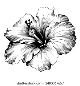 Hawaiian Hibiscus Fragrance Flower or Mallow Chenese Rose.  Flora and Isolated Botany Plant with Petals. Tropical Karkade or Bissap Herbal Tea, Crimson Flora. Blossom and Nature Theme.