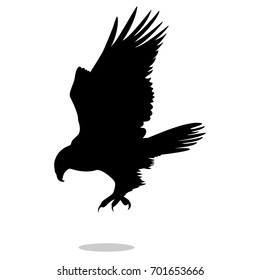 Hawk eagle falcon bird black silhouette animal. Vector Illustrator.