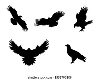 Hawk Eagle Falcon Orlan. Silhouettes predator birds. Vector illustrator