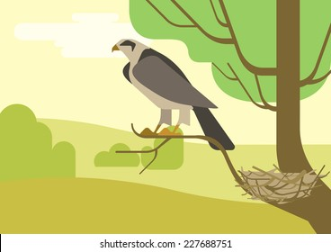 Hawk or eagle on nest located on tree branch. Flat design cartoon vector wild animals and birds. Flat nature zoo children collection.