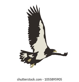 Hawk flying vector isolated on white