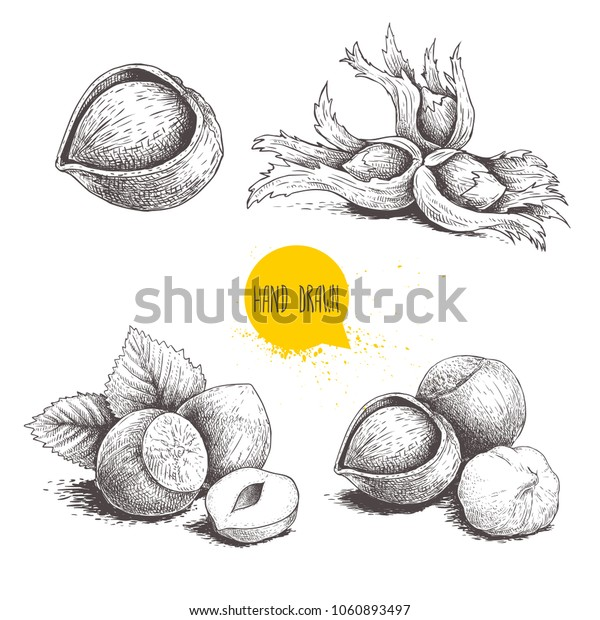 Hazelnut sketches. Single, group, peeled and whole, with leaves. Engraved sketch style illustrations. Organic food. Component for sweet food and cosmetics. Vector pictures isolated on white.