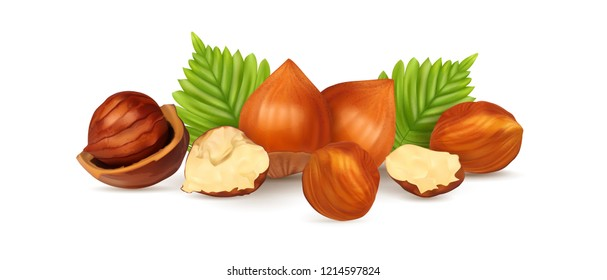 Hazelnuts with leaves. Photo-realistic vector illustration. Fresh organic filbert isolated on white background. Closeup set.