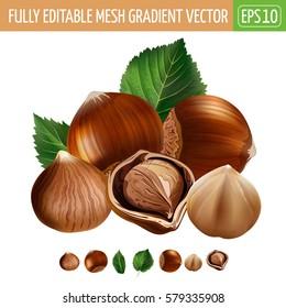 Hazelnuts on white background. Vector illustration