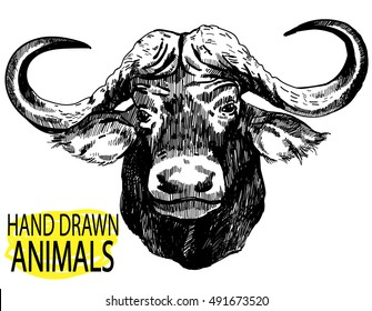 The head of the African buffalo. Drawing by hand in vintage style.