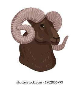 Head of Altai mountain ram. Portreit of wild animal. Vector illustration isolated on white background. Childrens animal vector illustration