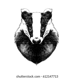 head badger symmetric, sketch vector graphics black and white drawing