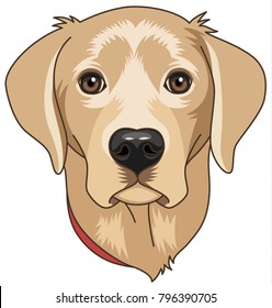 Head of beige cartoony labrador isolated on white background. Dog is symbol of 2018 year