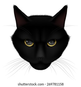 Head of black cat isolated on a white background