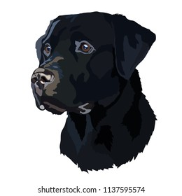 Head Black Labrador Vector