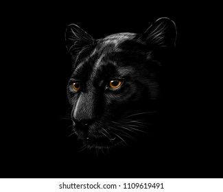 Head of a black panther isolated on a black background. Vector illustration