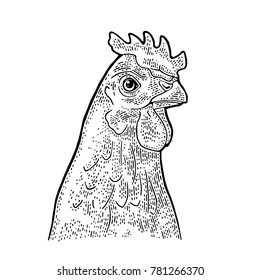 Head Chicken. Hand drawn in a graphic style. Vintage monochrome vector engraving illustration for poster, web. Isolated on white background