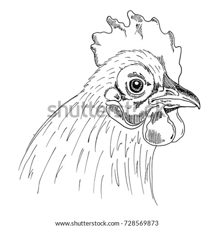 Head Chicken Sketch Liner Freehand Drawing Stock Vector Royalty