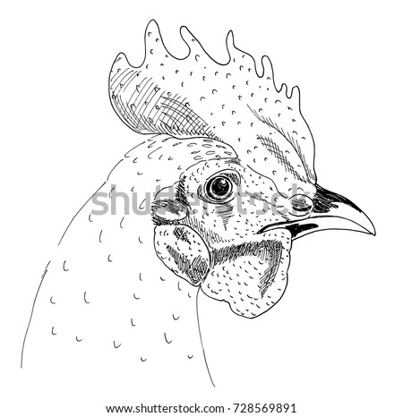 Head Cock Sketch Liner Freehand Drawing Stock Vector Royalty Free