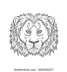 Head of a Coward and Scared Lion Front View Black and White Drawing