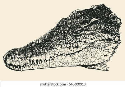 how to draw an alligator head