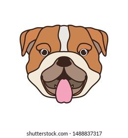 head of cute bulldog ingles dog on white background