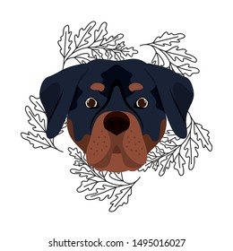 head of cute rottweiler dog on white background