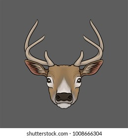 Head of deer, portrait of wild animal hand drawn vector Illustration