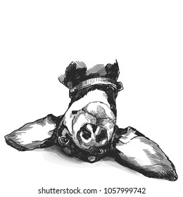 the head of the dog breed Dachshund lies funny with big ears and a smiling, black-and-white drawing in a sketch style vector