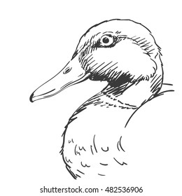 Head of duck isolated Vector sketch Hand drawn illustration black on white background