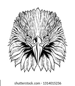 Head of Eagle Black and White, Front View Eagle Head, Vector Illustration, Isolated Vector