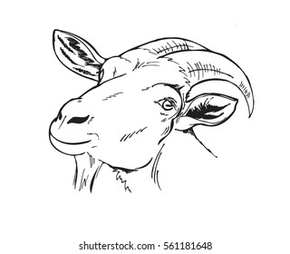 head of the goat, farm animals, black and white vector illustration in graphic style