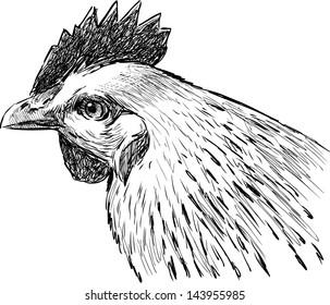 head of hen