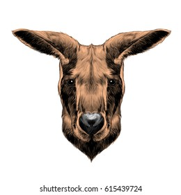 head kangaroo symmetric, sketch vector graphic colored drawing