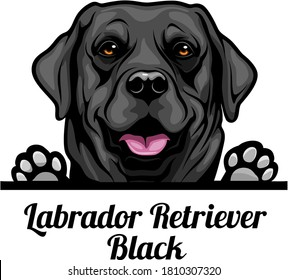 Head Labrador Retriever Black - dog breed. Color image of a dogs head isolated on a white background