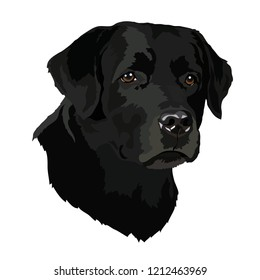 Head of a Labrador. Vector illustration.eps