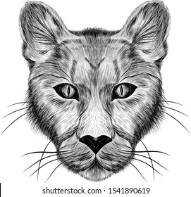 the head of a lioness animal sketch black and white