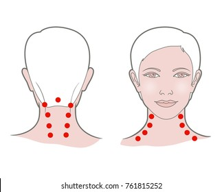 Head with a neck of a young woman with dots for self-massage. Front and back view. Vector. Linear graphic, isolated on white background