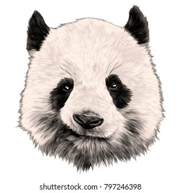 head Panda grins sketch vector graphics color picture