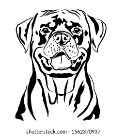 Head portrait contour outline, sketch of German Rottweiler silhouette vector illustration