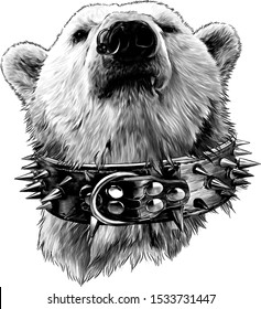 the head of a proud bear looking confidently forward in a leather collar with metal spikes and an earring in the nose, sketch vector graphics monochrome illustration on a white background