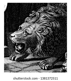 Head of Roaring Lion from an engraving of an angel shutting the mouths of the lions when Daniel was thrown into the lions den, vintage line drawing or engraving illustration.