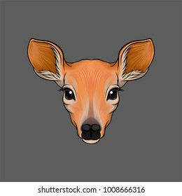 Head of roe deer, portrait of wild animal hand drawn vector Illustration