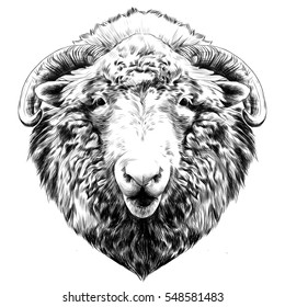 the head of a sheep hanging face front black and white sketch vector