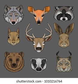 Head of wild animals set, portrait of wolf, doe, raccoon, squirrel, deer, hare, bear, badger and lynx hand drawn vector Illustrations