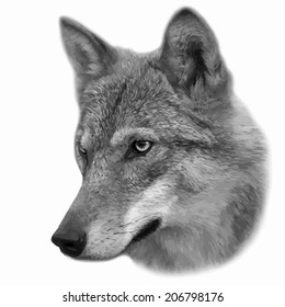 The head of wolf female, isolated on white background. Side face portrait of a forest dangerous beast, Canis lupus lupus. Amazing gray scaled vector image. Great for user pic, icon, label, tattoo.