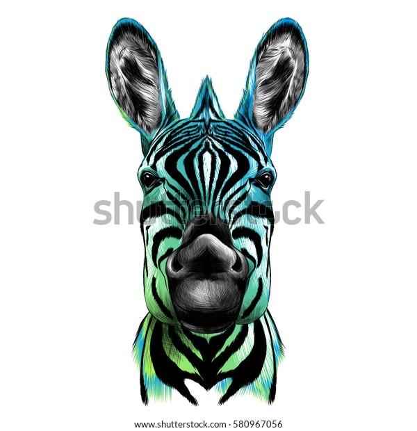 Zebra Kafasi Vektor Rengi Cizimi Siyah Stok Vektor Telifsiz
