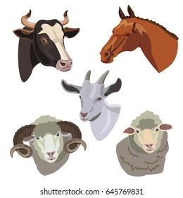 Heads cow, horse, ram, goat and sheep isolated on white background